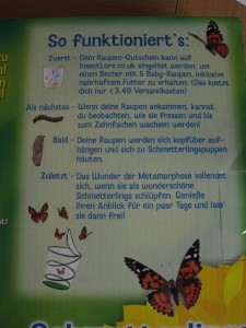 Schmetterlinge22